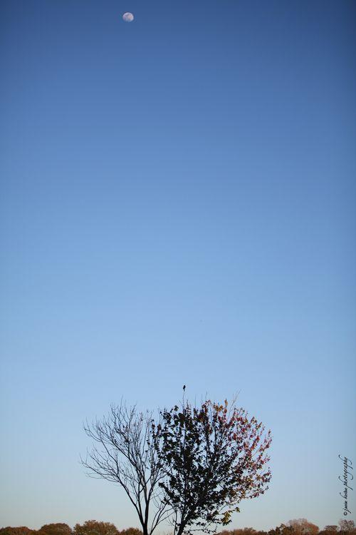 Canon70-200lens_0035
